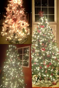 Three trees in my home!